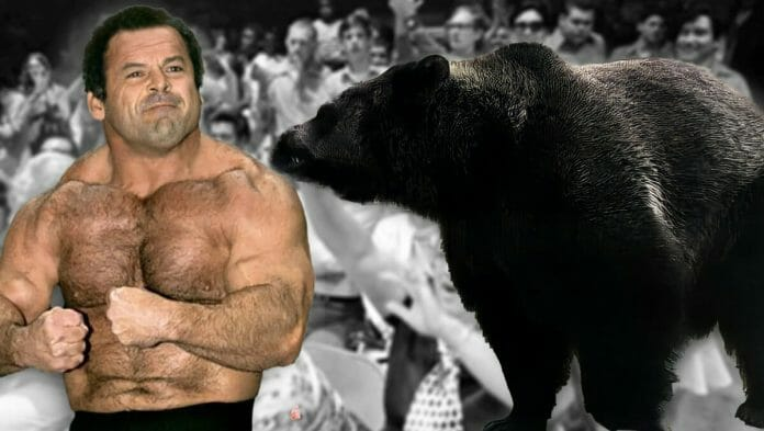"""Killer Kowalski tells the story of the time a wrestling bear overpowered and showed a bit of love to """"The Polish Powerhouse"""" Ivan Putski."""