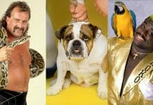 """Jake """"The Snake"""" Roberts with his reptilian counterpart Damian, The British Bulldogs' Matilda, and Koko B Ware with his beloved bird, Frankie."""