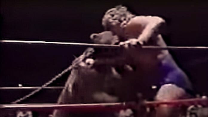 Tracy Smothers wrestling a muzzleless bear in Continental Championship Wrestling.